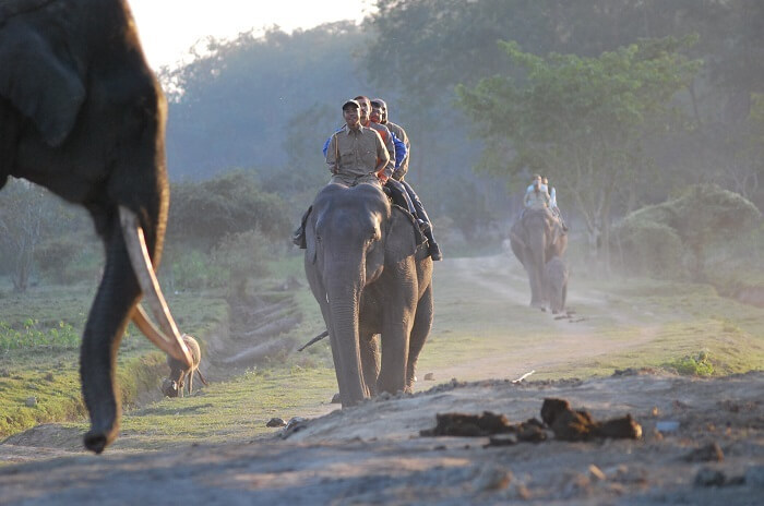 Elephant ride in Orang National Park