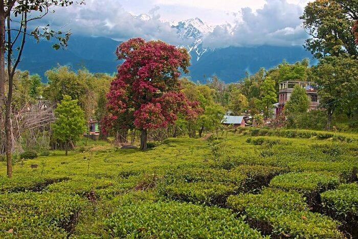 Explore the tea plantations