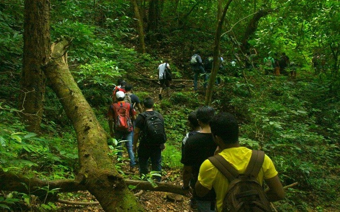 Tourists trekking through a jungle in Kerala
