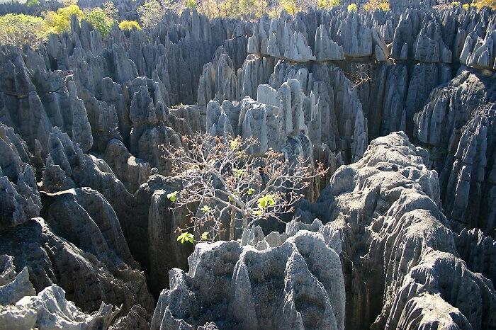 Tsingy Of Bemaraha