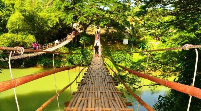 Walk across the Bamboo Hanging Bridge in Philippines