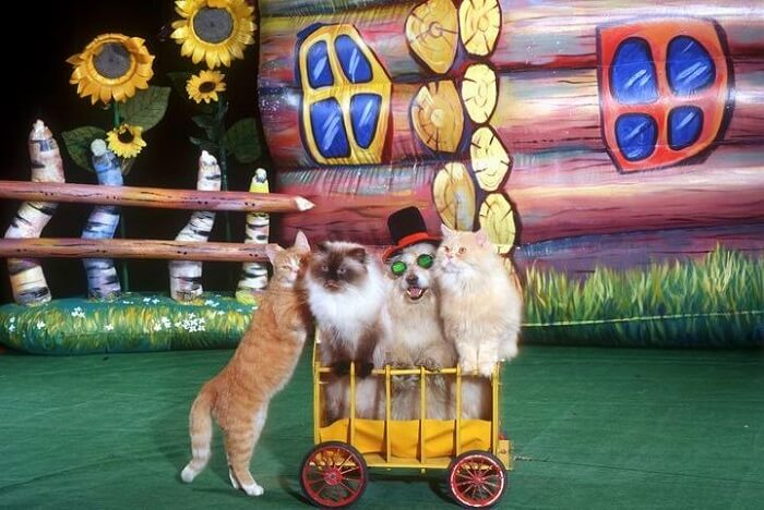 Watch a show of the Moscow Cat Theatre in Russia