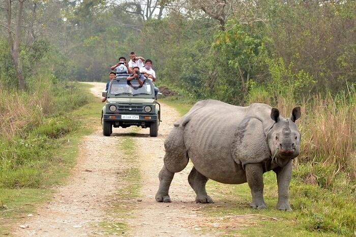 Wildlife in Orang