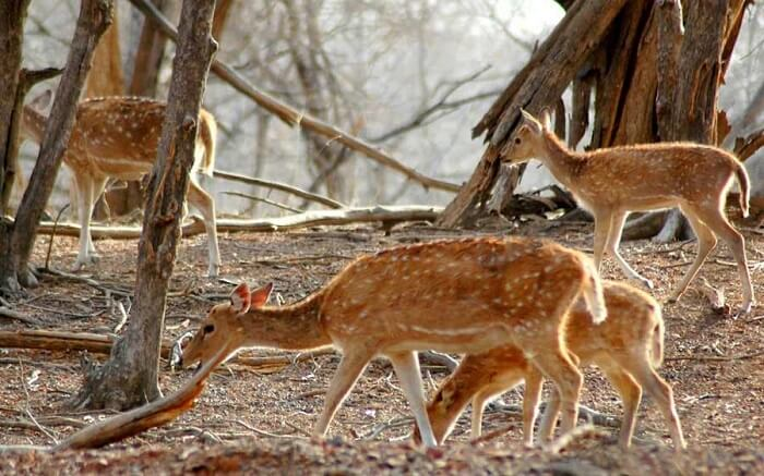 Witnessing wildlife at Mount Abu Wildlife Sanctuary