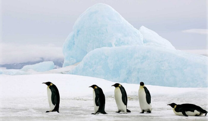 penguins amid ice