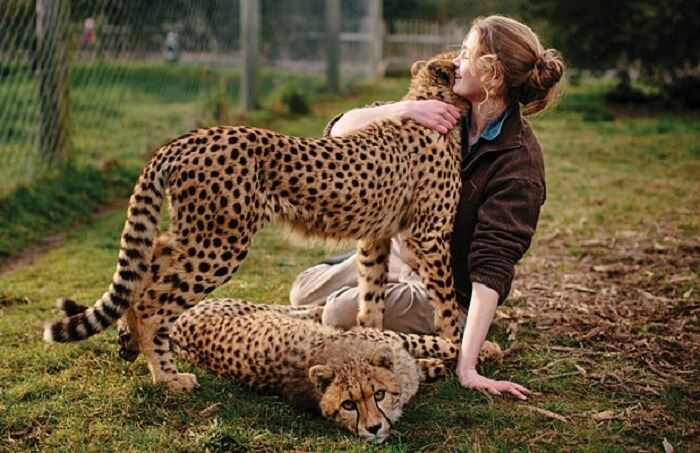 a woman playing with two leopards