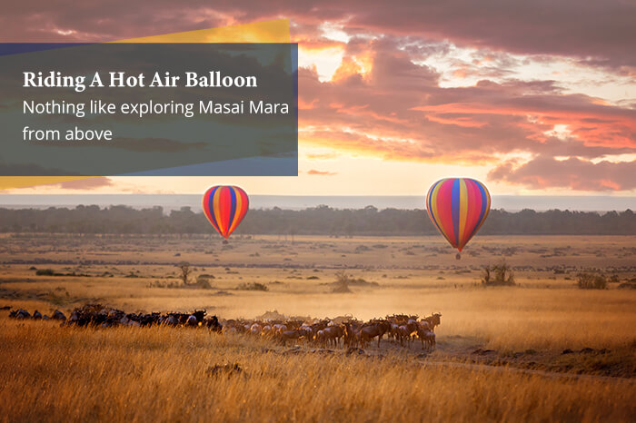 acj-2906-masai-mara-national-park (13)