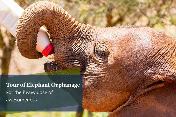 acj-2906-masai-mara-national-park (18)