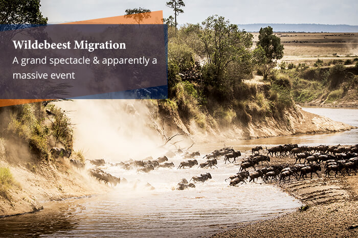 acj-2906-masai-mara-national-park (20)