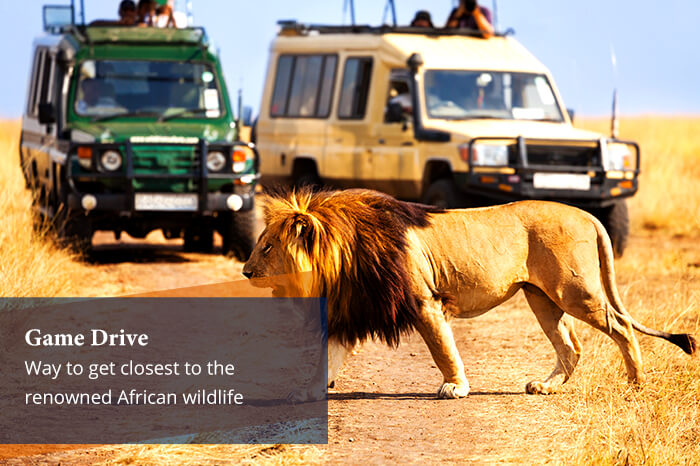 acj-2906-masai-mara-national-park (4)