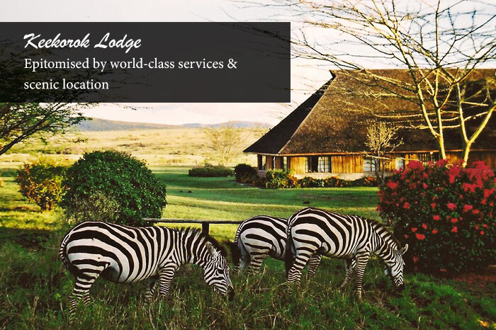 acj-2906-masai-mara-national-park (6)