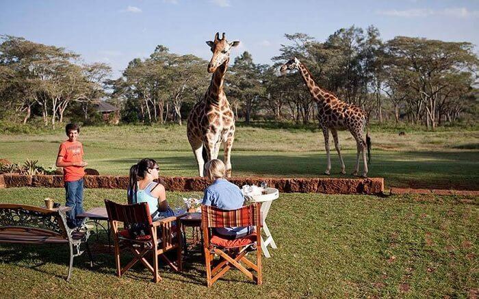 acj-3005-giraaffe-manor-kenya (10)