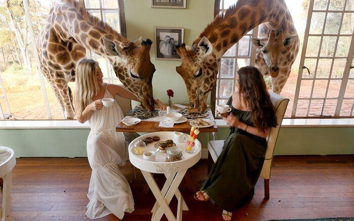 acj-3005-giraaffe-manor-kenya (7)