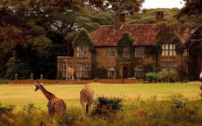 acj-3005-giraaffe-manor-kenya (8)