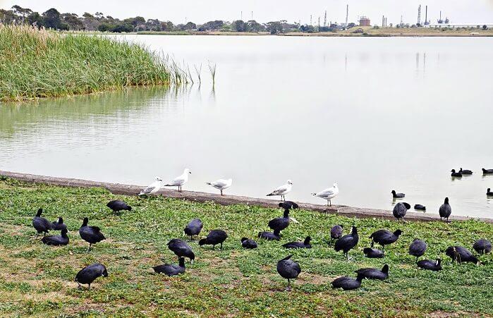 birds-near-a-lake