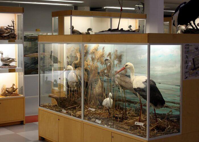museum sum interpretation centre