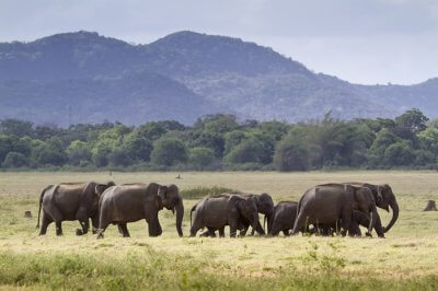 paradise for elephants
