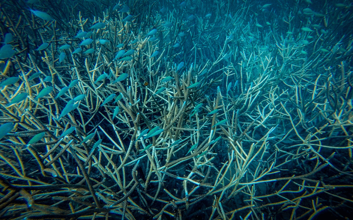 the underwater world in Kadmat Island