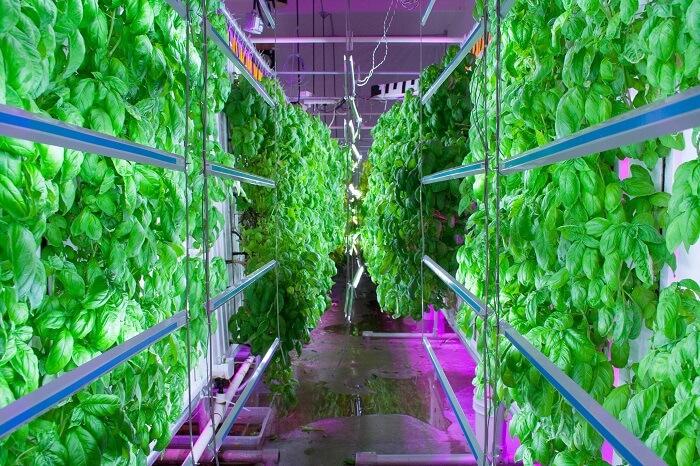 World's largest vertical farm in Dubai