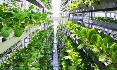 World's largest vertical farm Dubai