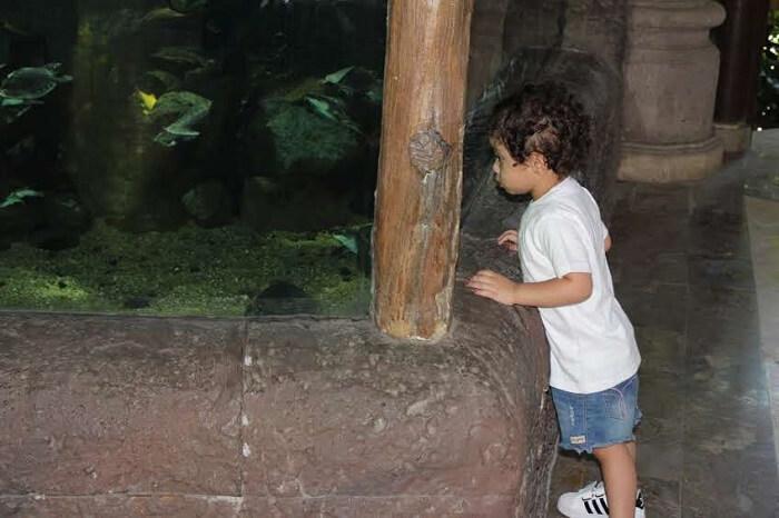daughter looking at animals in Bali Safari