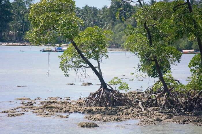 Mangrooves in Andaman