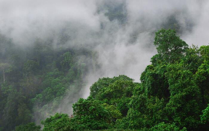 Bird-eye view of Joypur Rainforest