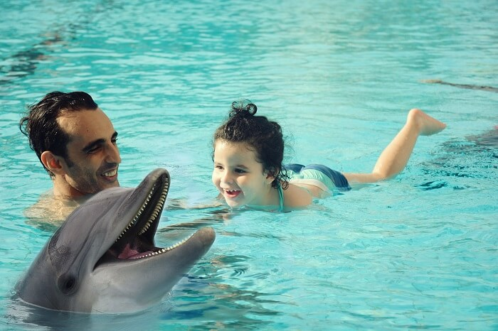 Let your kids enjoy a free visit to the Dubai Dolphinarium