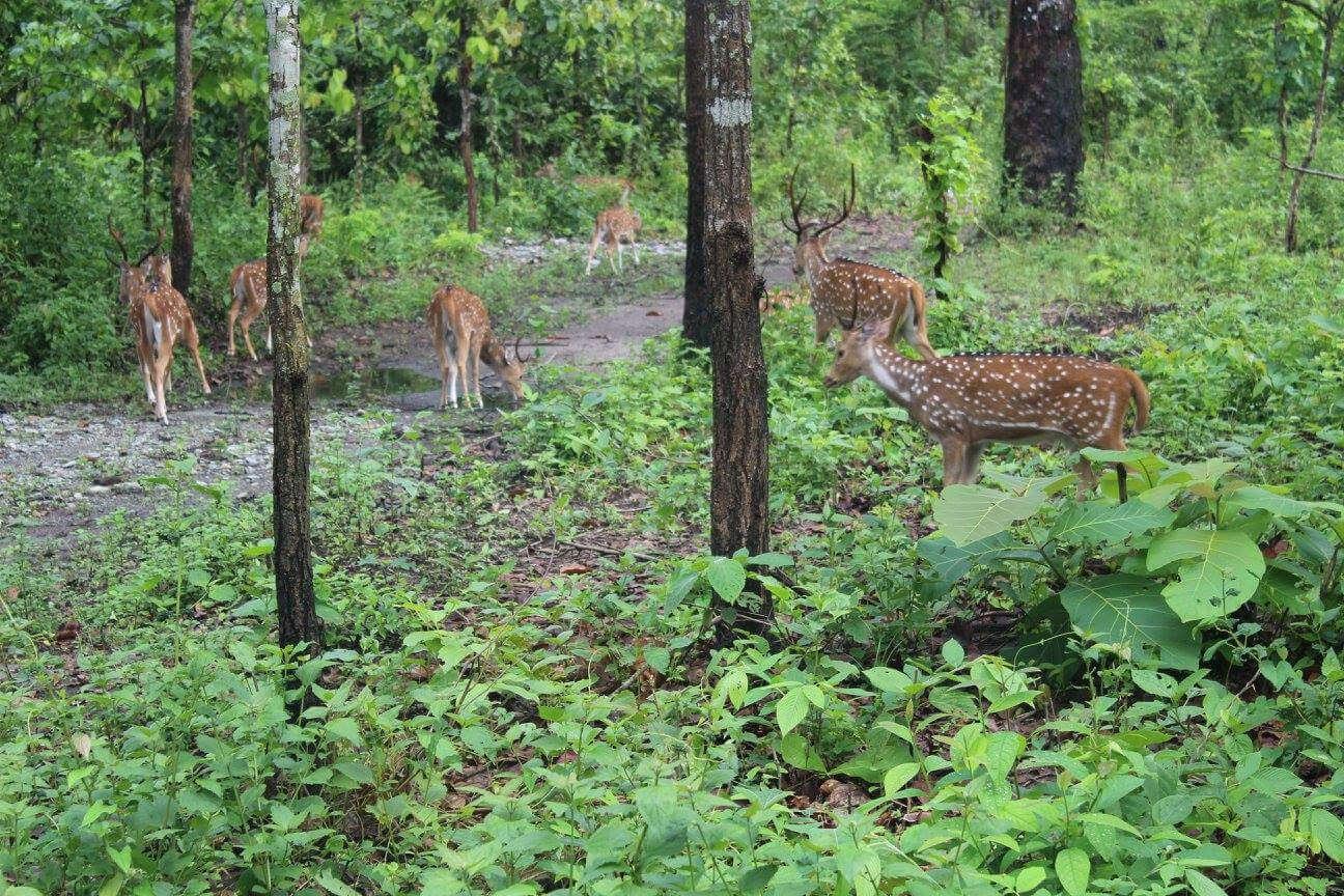 Mahananda Weir Wildlife Sanctuary