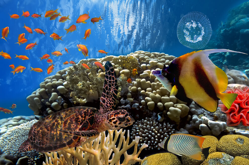 the colourful coral reefs