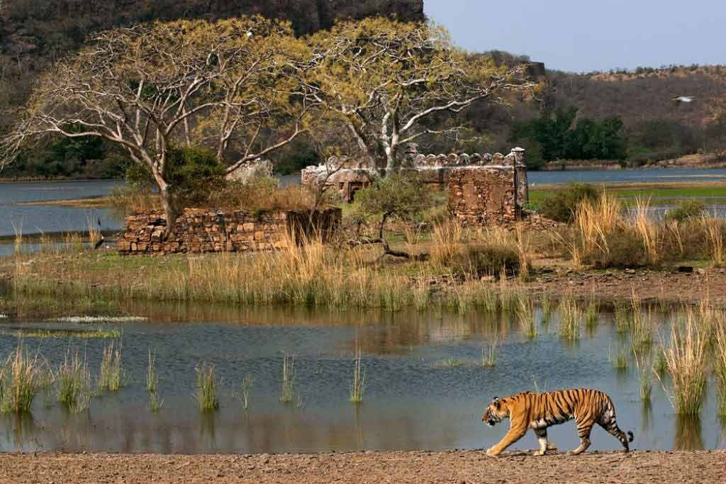 one of the most tranquil places to visit in Ranthambore