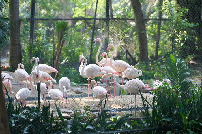 Zoo di Napoli in Naples, italy
