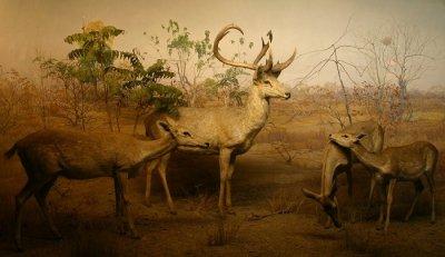 Keibul Lamjao National Park in Imphal