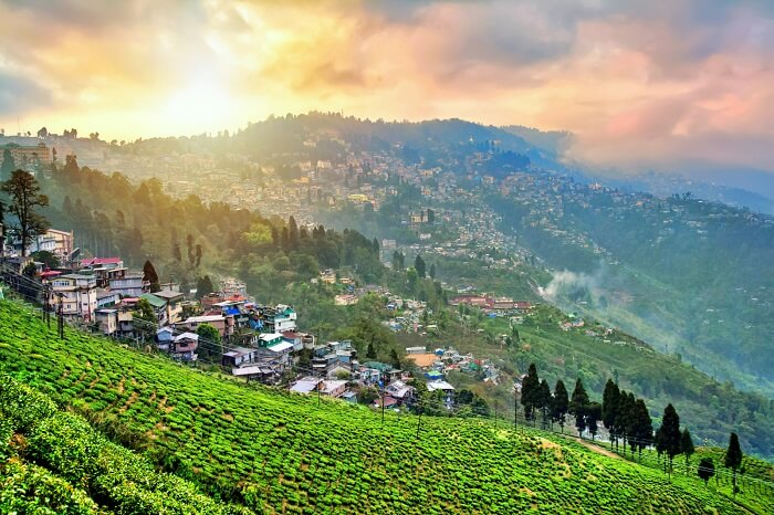 Image result for darjeeling