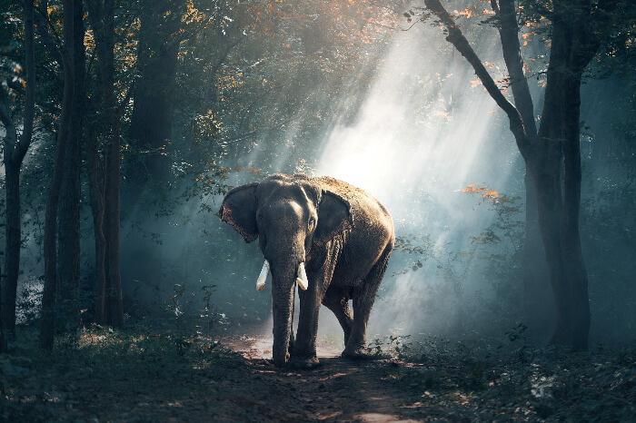 An elephant in Dibrugarh forest