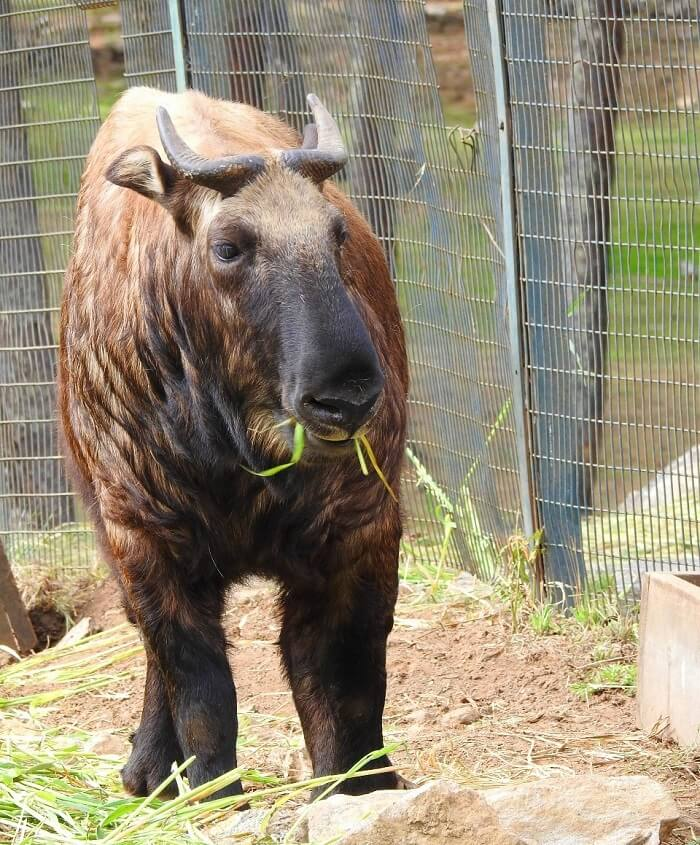 rohit bhutan family trip travelogue animal takin