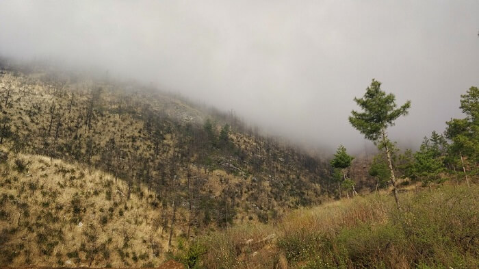 rohit bhutan family trip travelogue fog