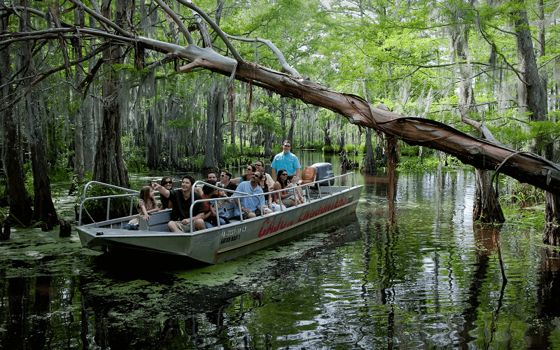 The swamps of New Orleans