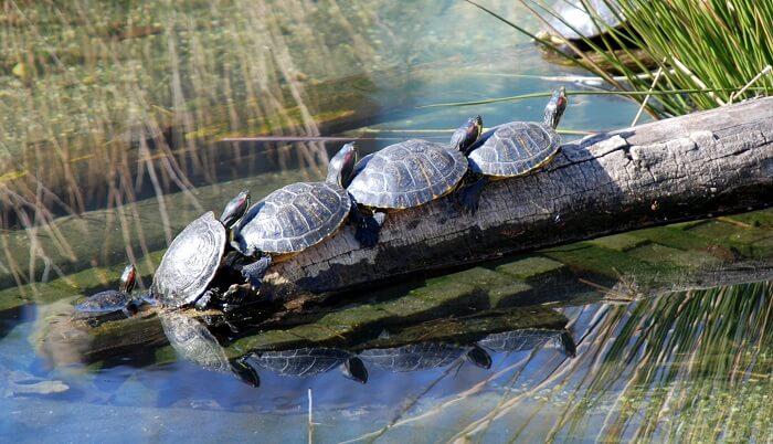 Turtles in Washington Zoo