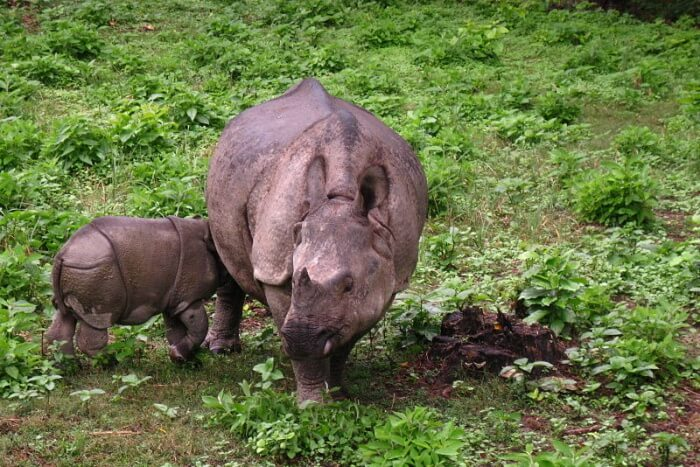 Best time to visit Chitwan National Park
