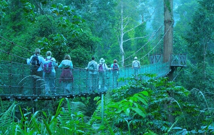 Borneo Rainforest Tour