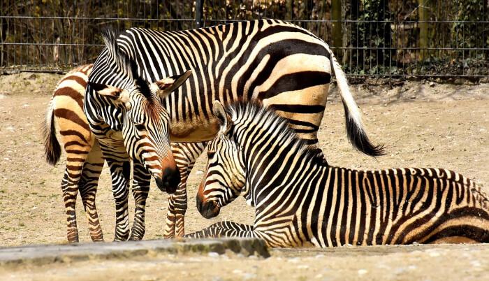 Casela Nature Park Segway Mauritius