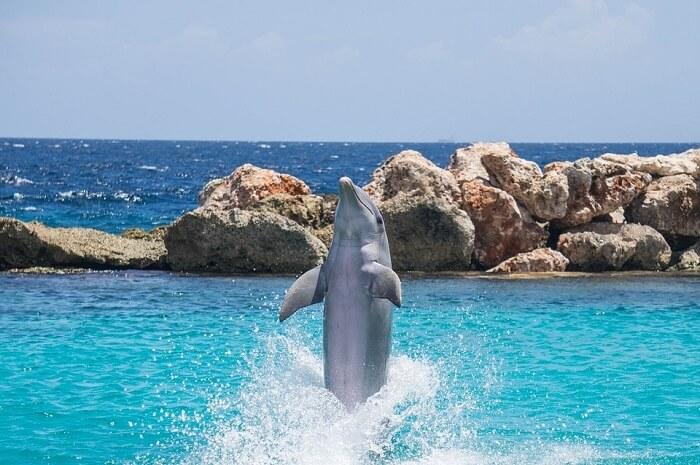 Dolphin Encounter Mauritius