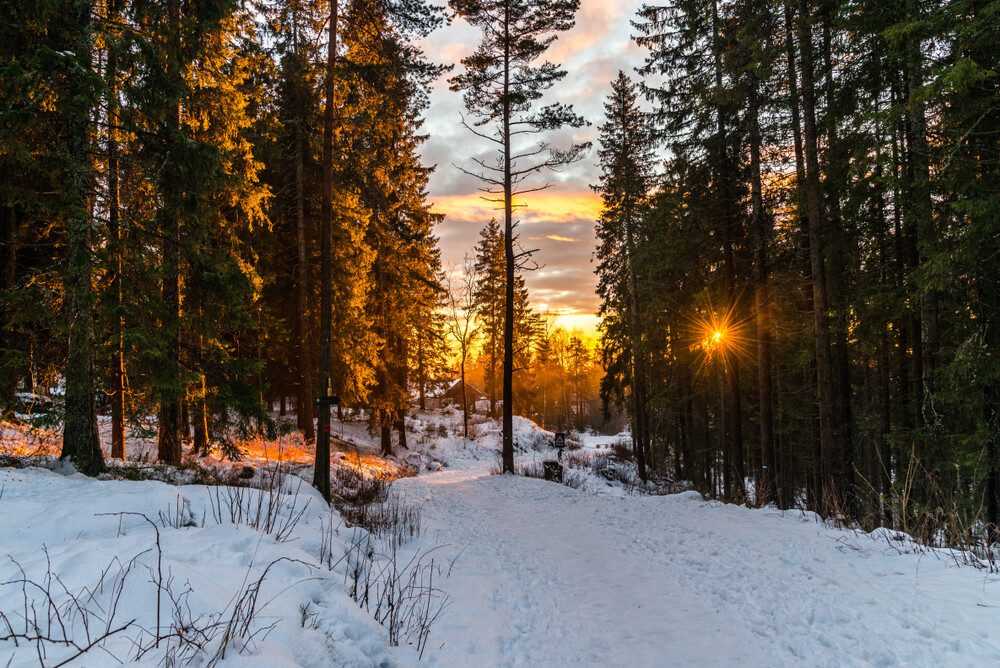 Nordmarka forest is famous for hiking