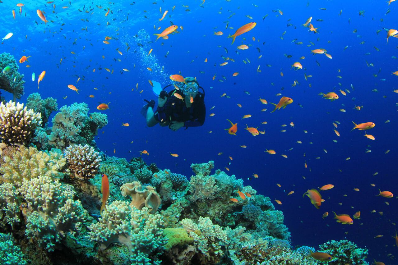a shallow Bentota diving site