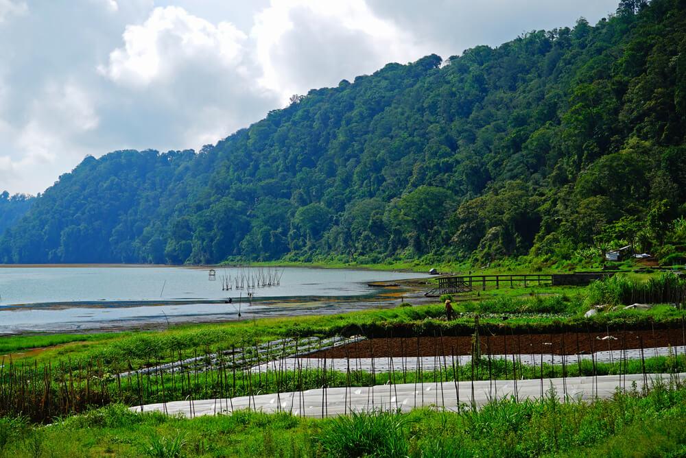 Kintamani Organic Farm shutterstock_642463096