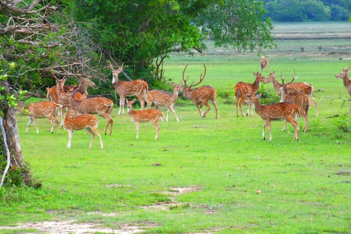 Kumana National Park in Sri Lanka