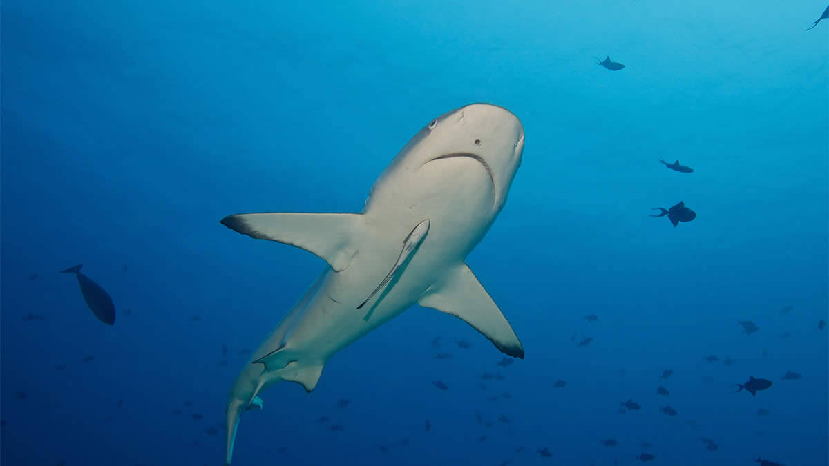 top diving sites in Maldives