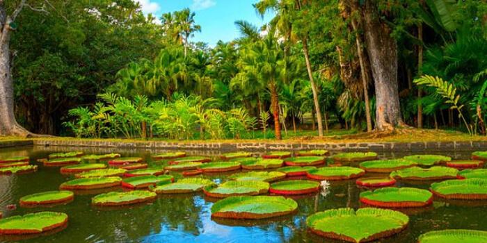 Mauritius National Botanical Garden In Mauritius