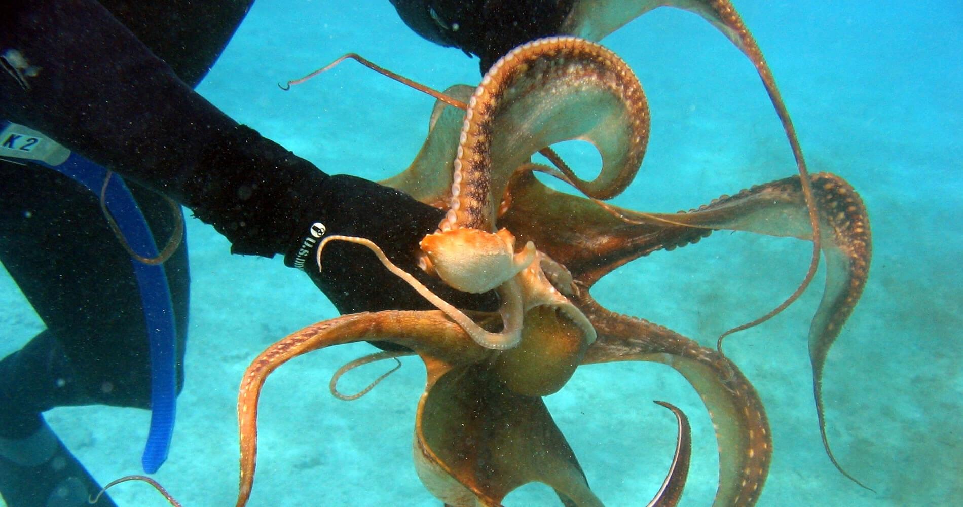 Octopus Diving Centre